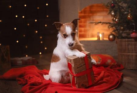 Xmas Doggie82493805